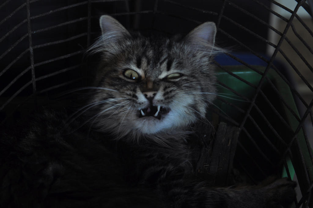 Nosferatu cat 1 by Desirestar