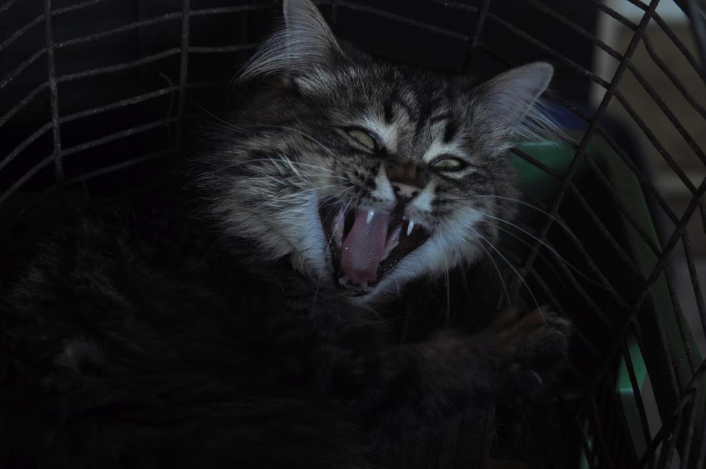 Nosferatu cat 2 by Desirestar