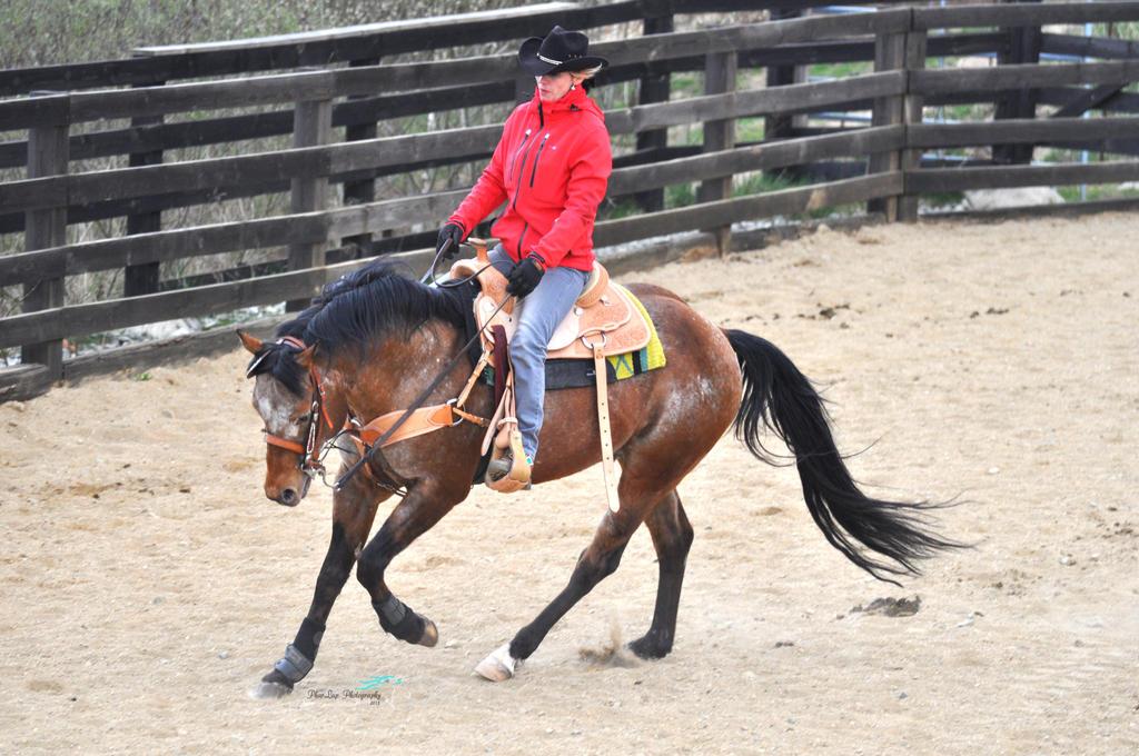 Appalossa stallion by Desirestar