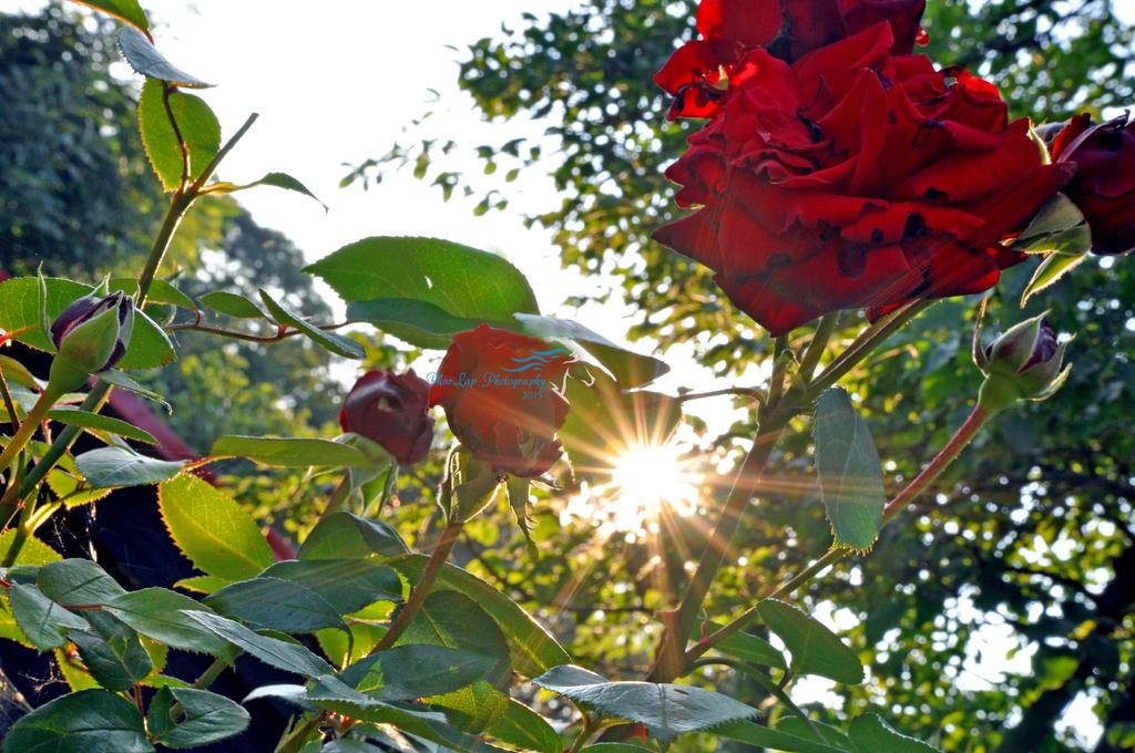 Evening in rosegarden by Desirestar