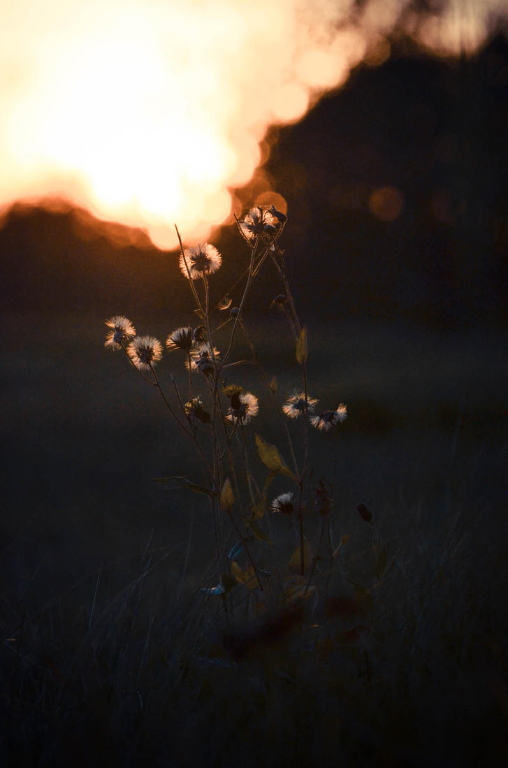 Magic fields by Desirestar