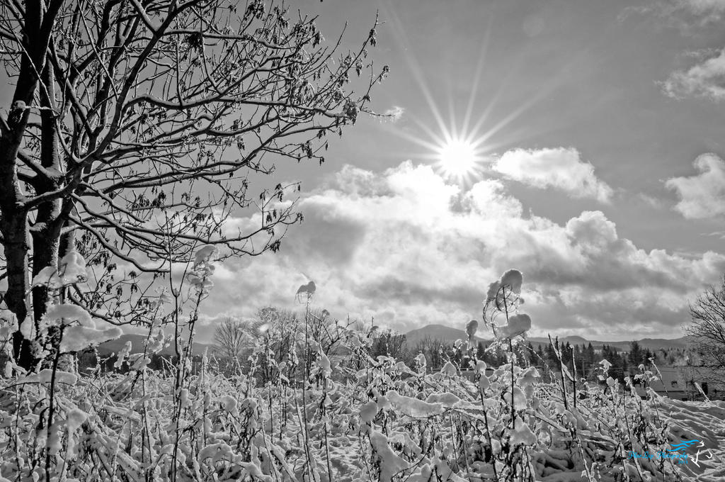 Winter sun by Desirestar