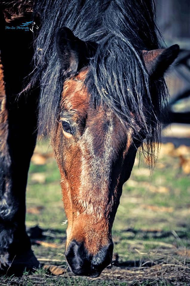 My horse by Desirestar