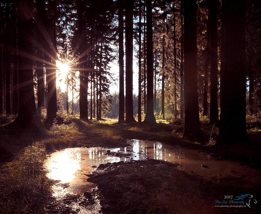 Light in the Woods by Desirestar