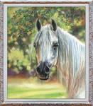White arabe horse