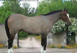 Contest Horse*