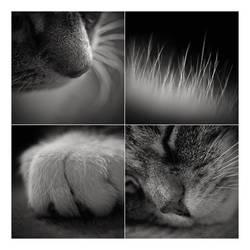 a cat's life by miezeTatze