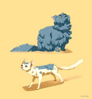 Secret Cats
