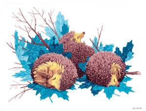 Three hedgehogs
