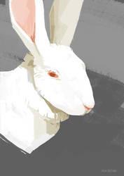 Sketch of an albino rabbit