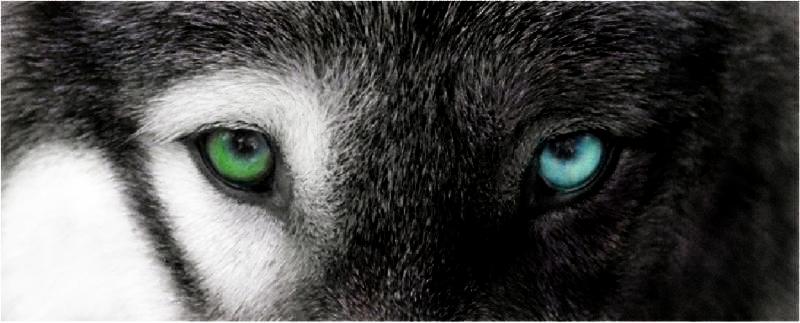 Elexzra Baylentine  Pretty_wolf_eyes_by_chloewheel-d57kz6a