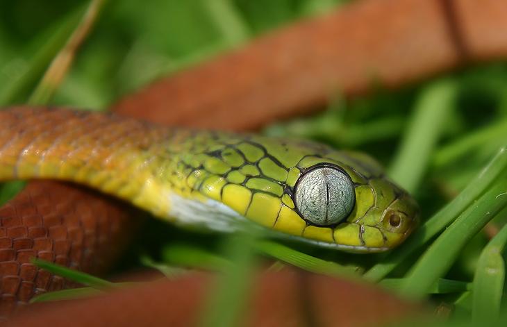 Mr Bug Eye by AngiWallace