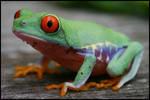 Tree frog on wood stock