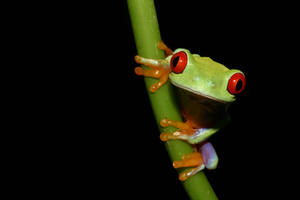 Red eyes on stalks by AngiWallace