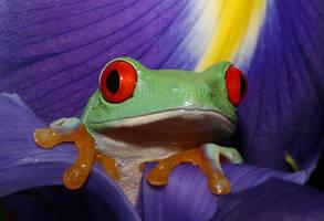 Frog amongst the Irises by AngiWallace