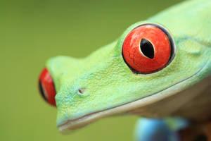 Macro frog by AngiWallace