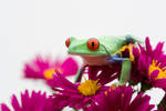 Frog amongst flowers