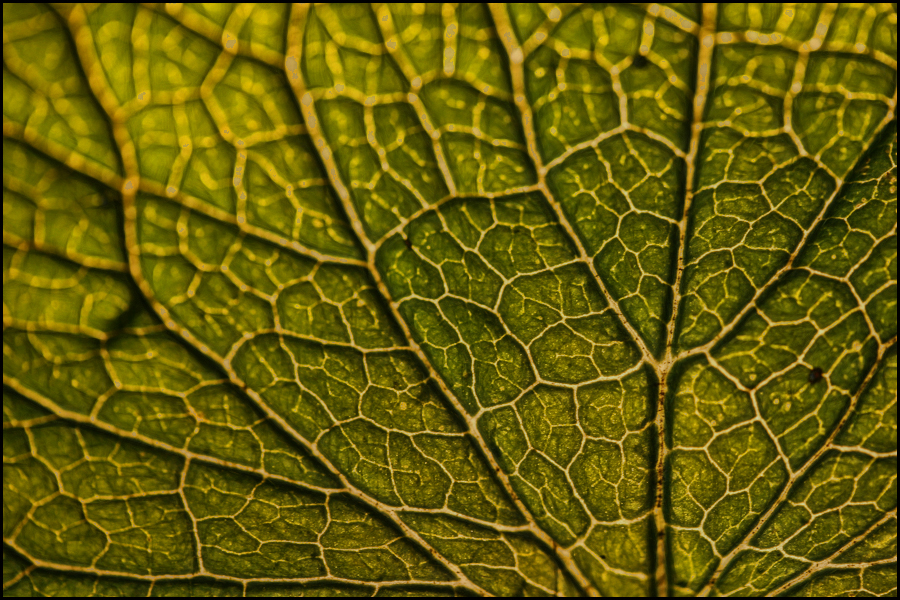 New leaf texture by AngiWallace