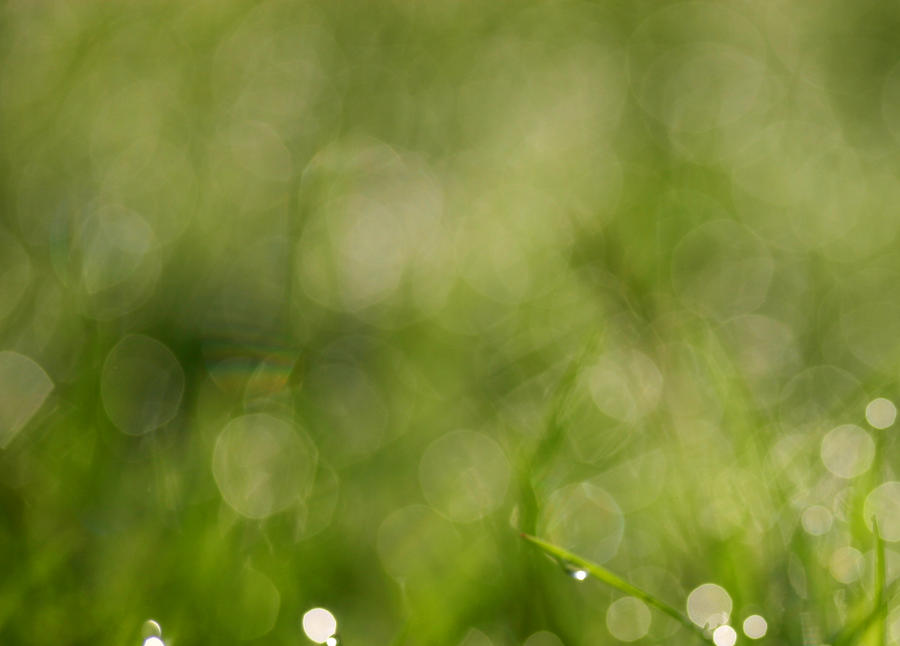 Green Grass Bokeh Texture By AngiWallace ...