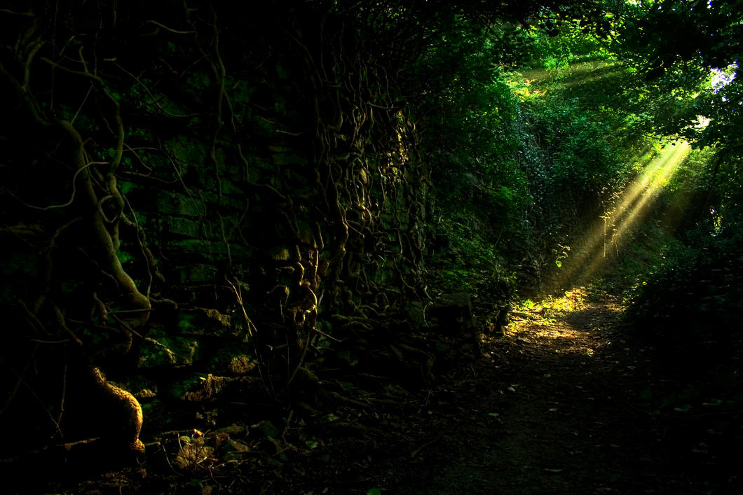 Enchanted woodland path stock