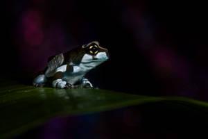 Amazonian by AngiWallace