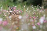 Eagle owl amongst wildflowers