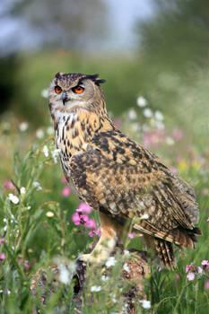 Eagle owl amongst wild flowers