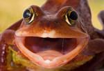 Frog yawn