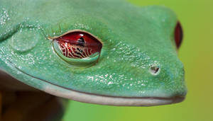 Frog eye membrane
