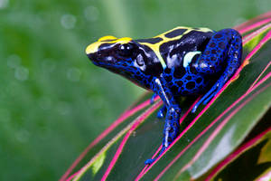 Dartfrog by AngiWallace
