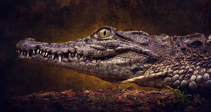 Nile crocodile by AngiWallace