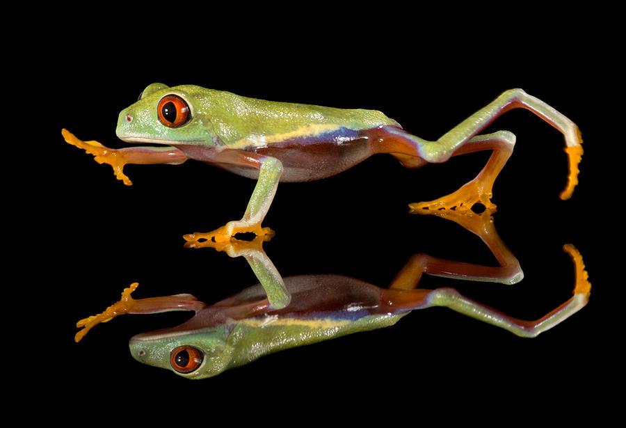 Run froggy run by AngiWallace