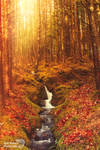 Enchanted woodlands