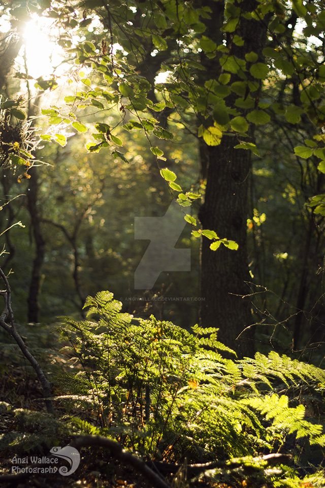 Sunny woodlands by AngiWallace