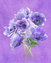 Anemone mistral pastel bunch by AngiWallace