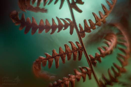 Dead fern macro