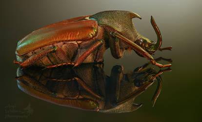Scarab beetle focus stacked
