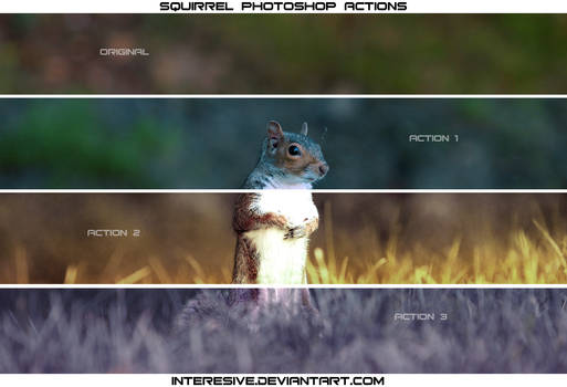 Squirrel - Actions