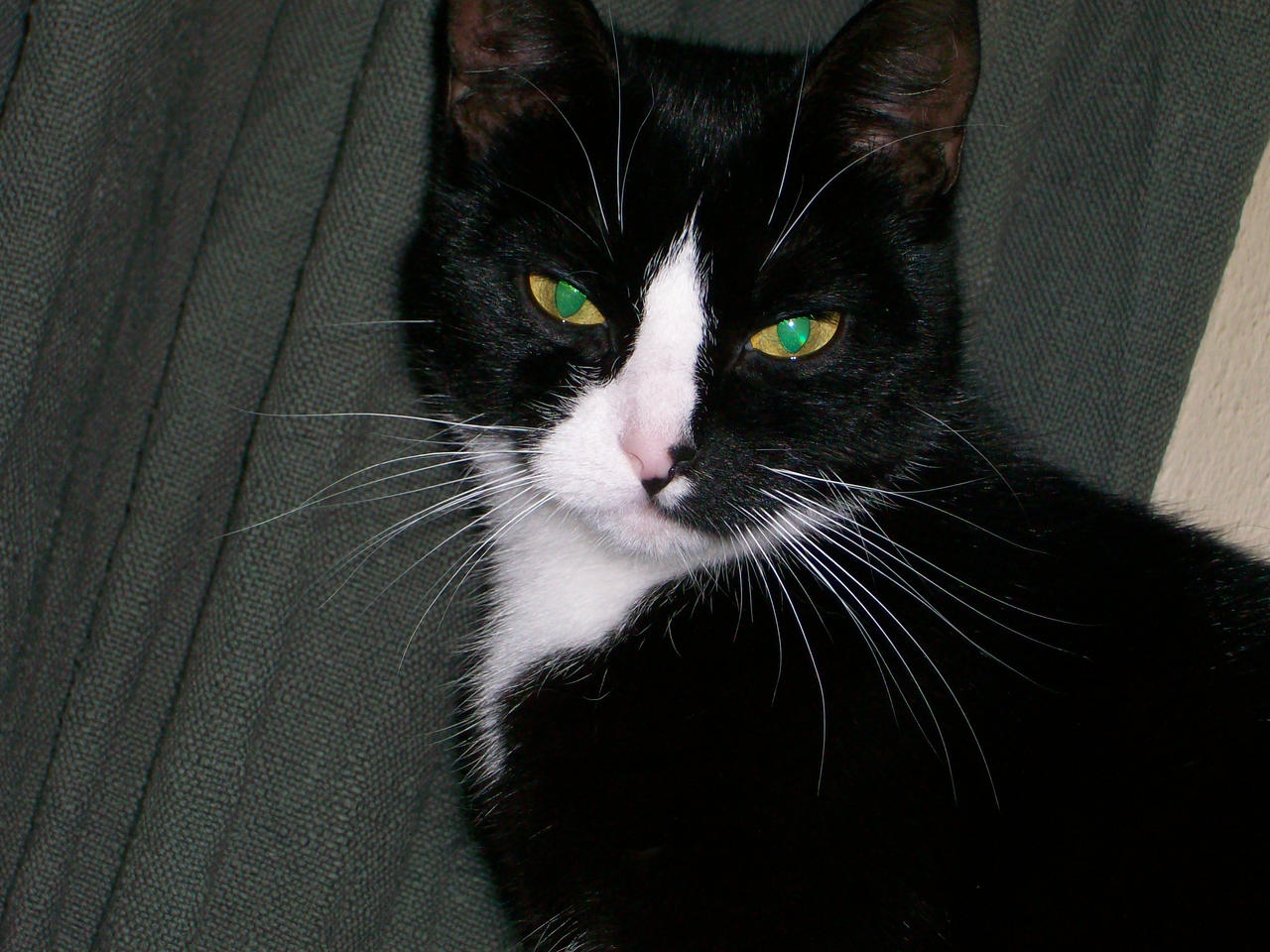 my kitten simba