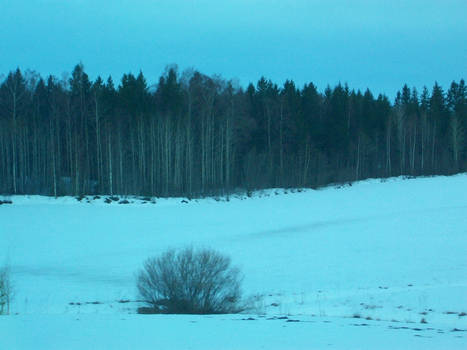 tree forest border in the snow