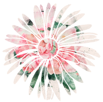 Watercolour Daisy Decal