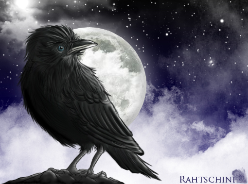Jackdaw by fullmoon