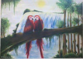 red parrots in rainforest