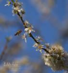 Spring April 04