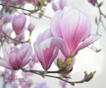 Spring April 02