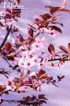 Spring April 01