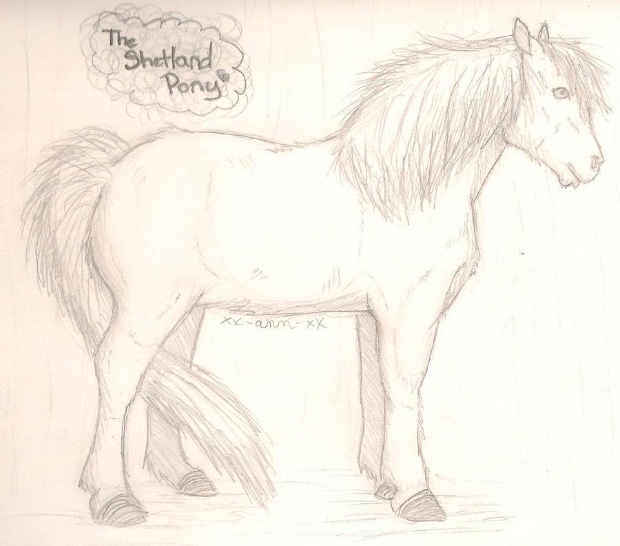 The Shetland Pony by Xx-Ann-xX