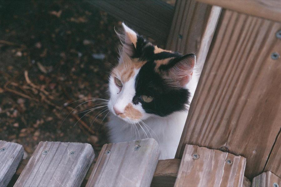 Sneaky Kitty by ThatzThatz
