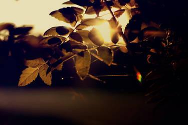 psychedelic autumn part 3 by Christinevenetskaya