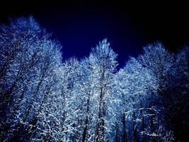 Snowy by karpit